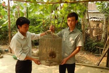 National Park Phong Nha - Ke Bang: Loris receiving small rescue